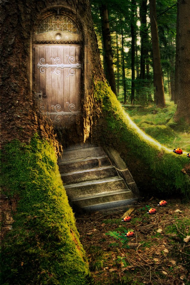 42 Enchanted Forest Wallpaper For Home On Wallpapersafari