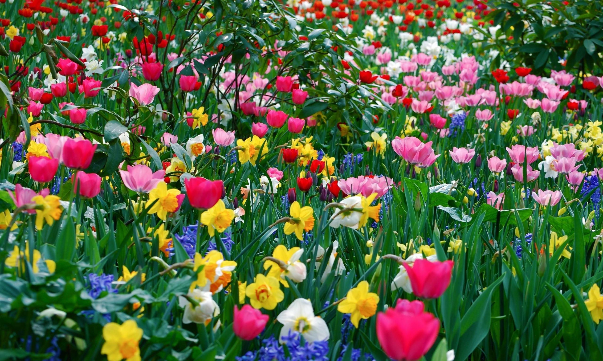 74 Spring Flower Wallpapers on WallpaperPlay 2560x1536