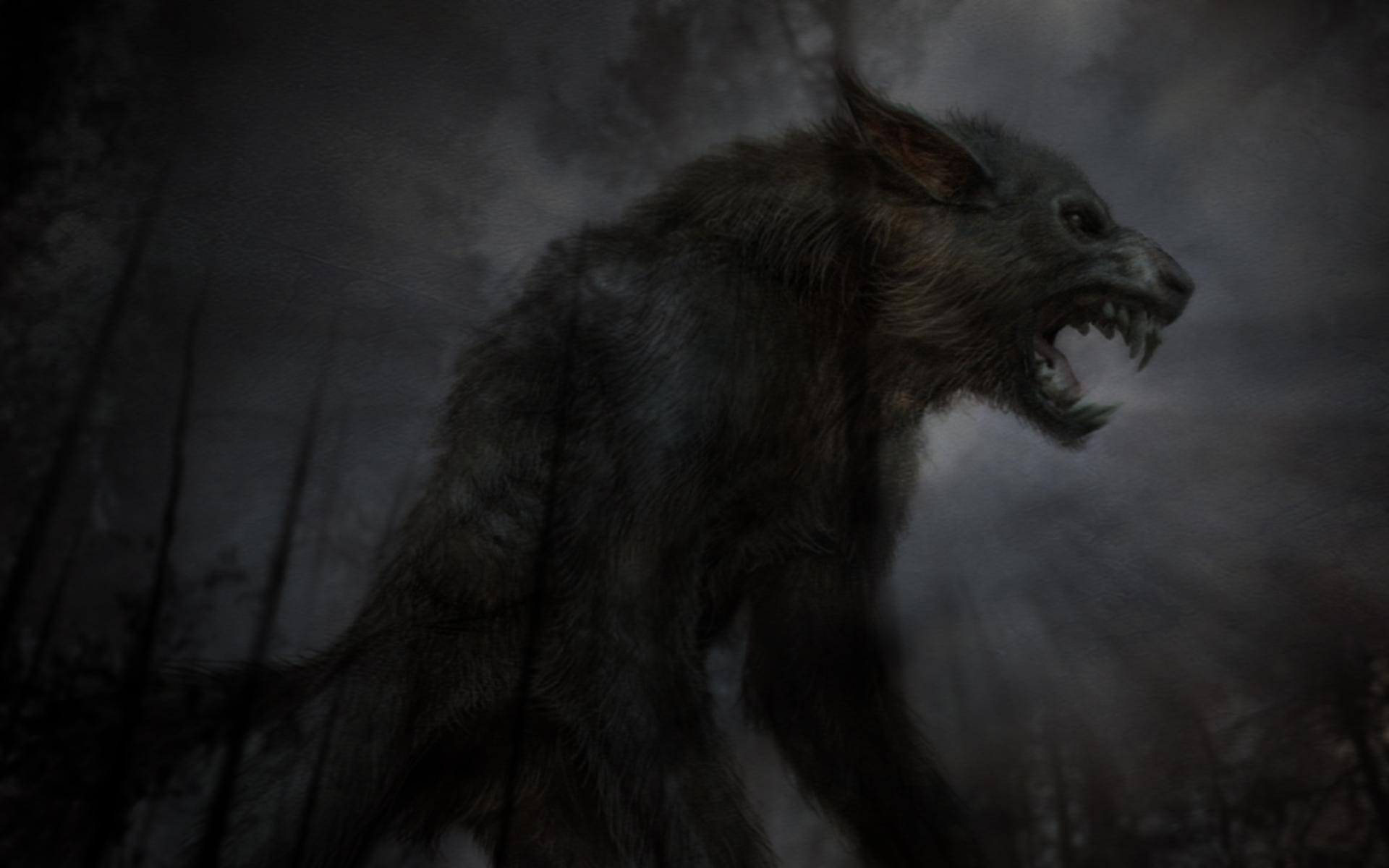 Download Beast Black Wolf HD Wallpaper 2691 Full Size 1920x1200