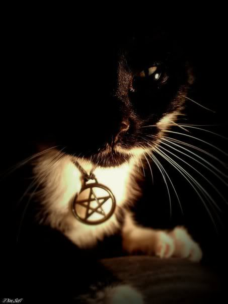 Wiccan Cat Image Wiccan Cat Picture Code 453x604