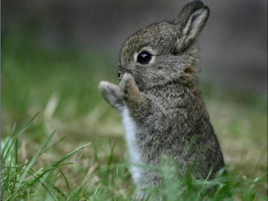 Cute Bunny Wallpapers   Top Cute Bunny Backgrounds 1024x768