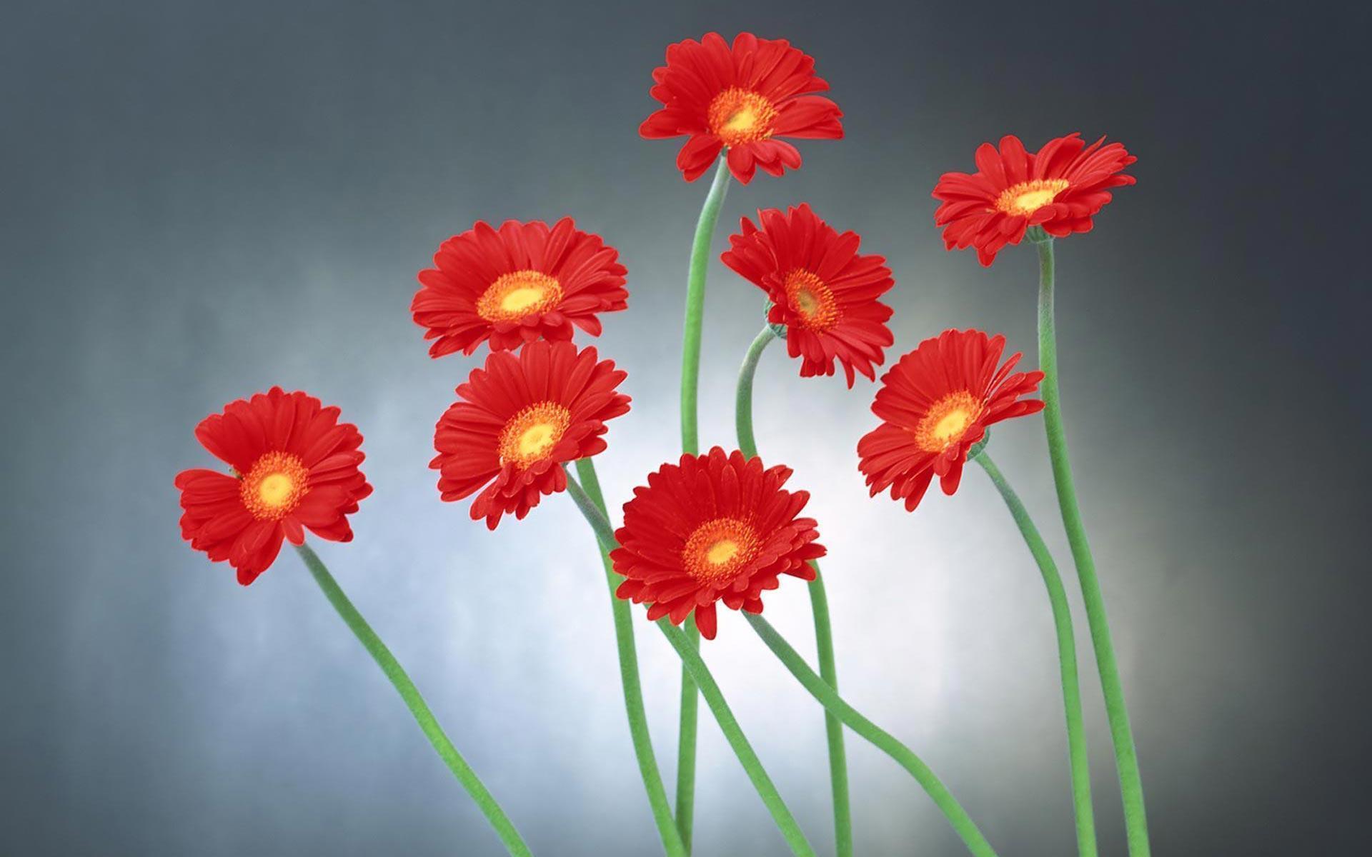 HD Flower Wallpapers 1920x1200