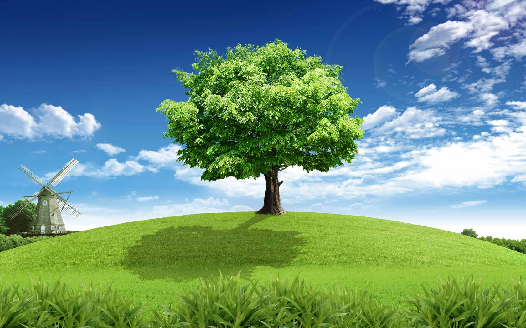 Cool Tree Backgrounds Wallpapersafari