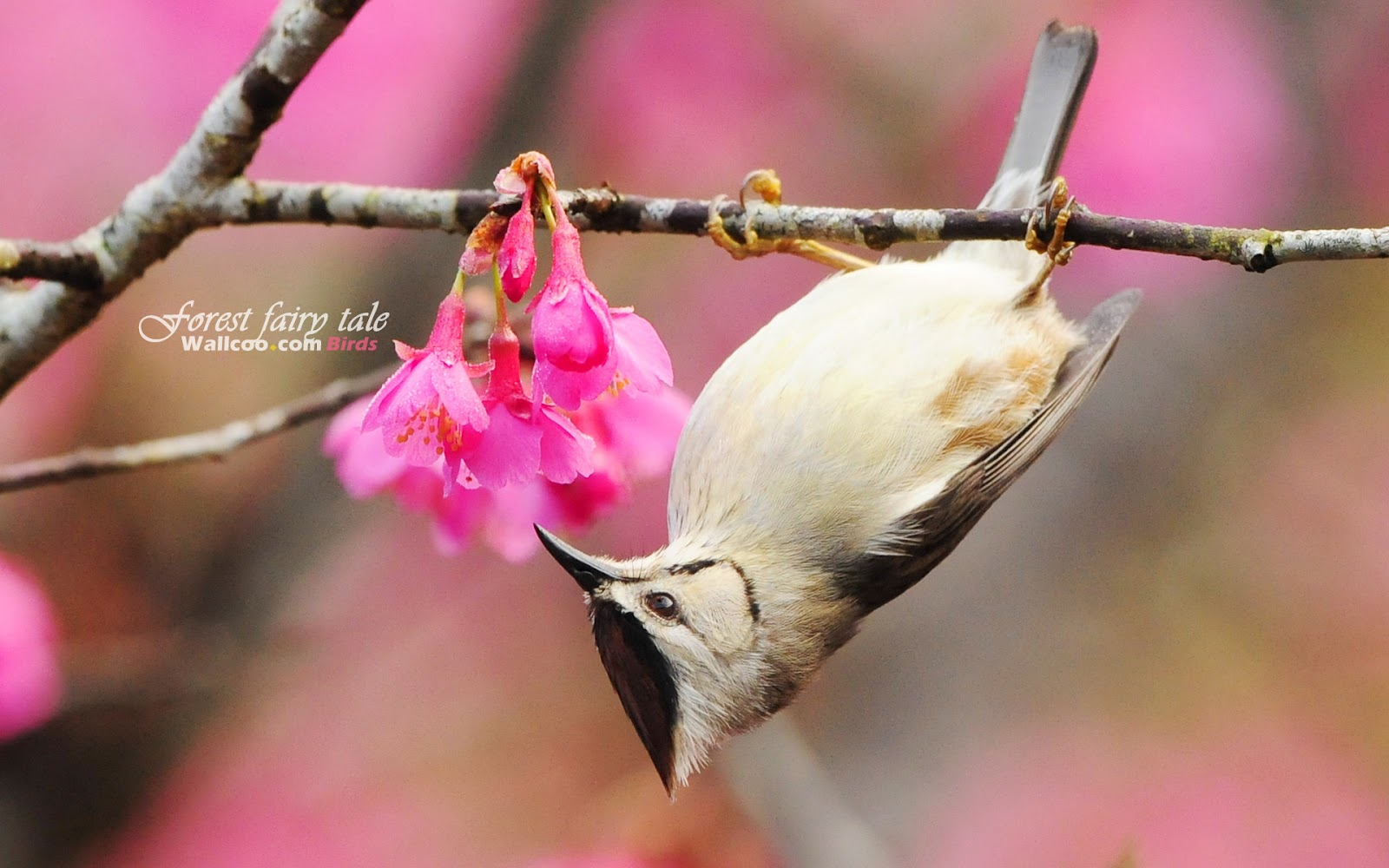 Bird and Pink Flower wallpaper Download Cute Bird and Pink Flower 1600x1000
