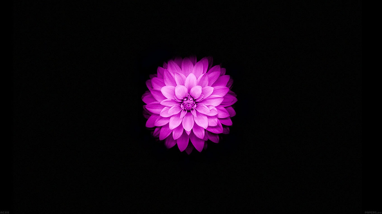 Apple iPhone 6 and iPhone 6s Wallpaper with Purple Lotus Flower in 1340x750