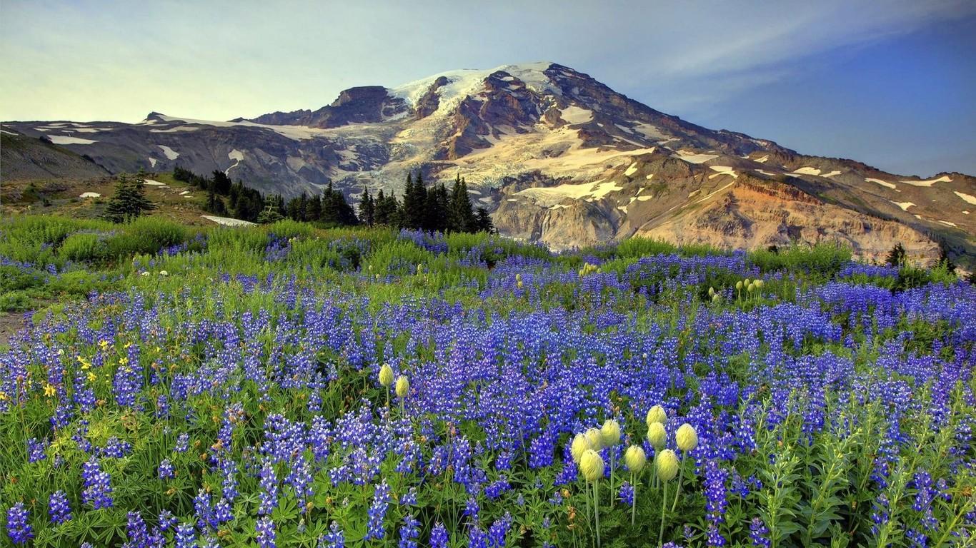 Mount Rainier National Park wallpaper 8303 1366x768