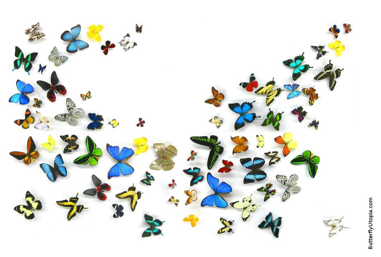Butterfly Wallpaper Wallpapers Backgrounds Desktop 1311x886