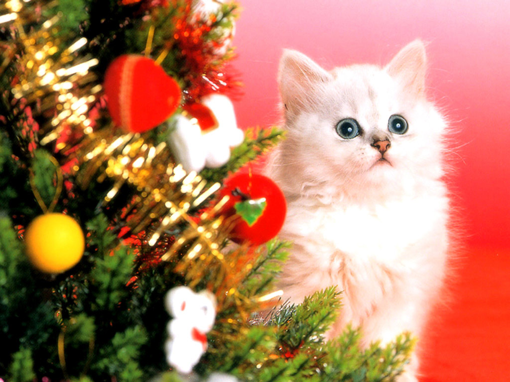 Kittens wallpapers   Christmas   Snow   Cat eyes   nature   Cats 1024x768