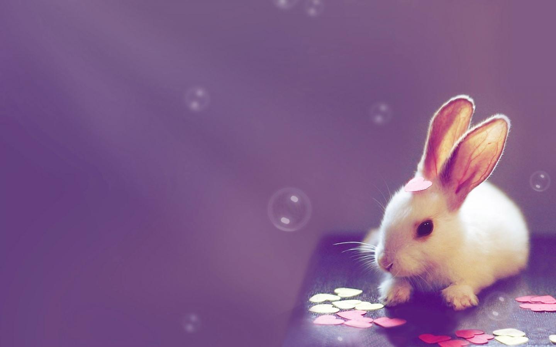 Cute Desktop Backgrounds with Quotes Desktop Image 1440x900