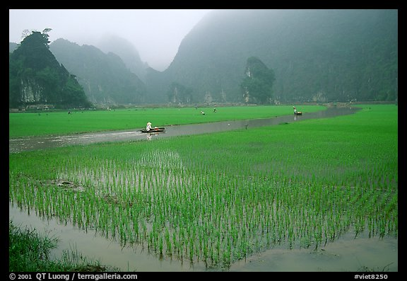 Rice fields river and misty mountains of Tam Coc Ninh Binh Vietnam 576x397