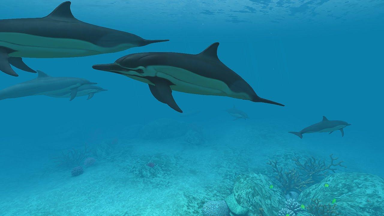 Dolphins 3D Screensaver Live Wallpaper HD 1280x720