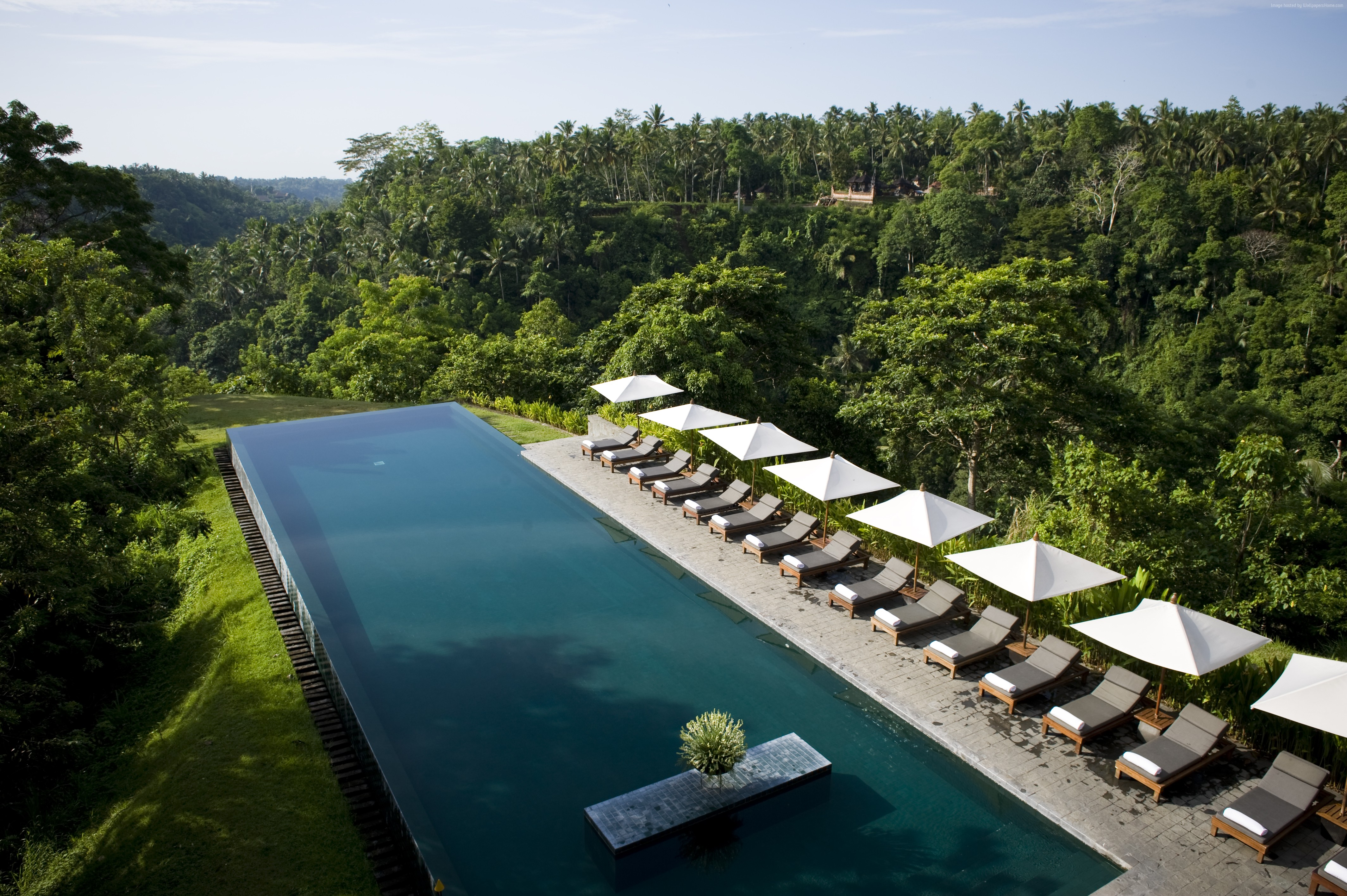 114424 pool Alila Ubud sunbed tourism travel forest 4256x2832