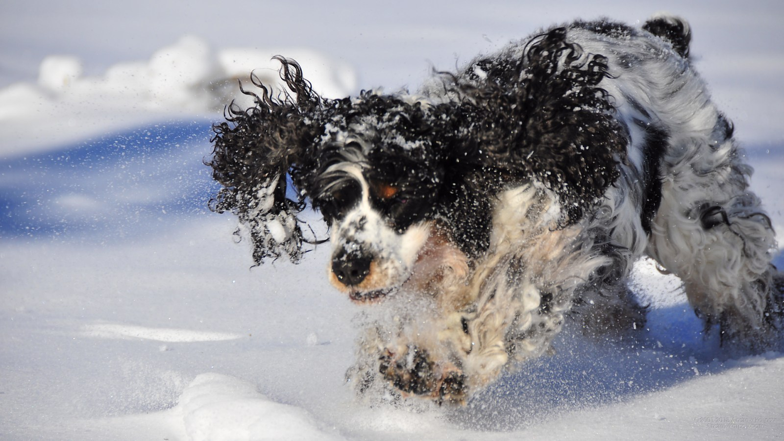 image-wallpaper-1600-900-pictures-wallpaper-A-winter-time-dog-free ...