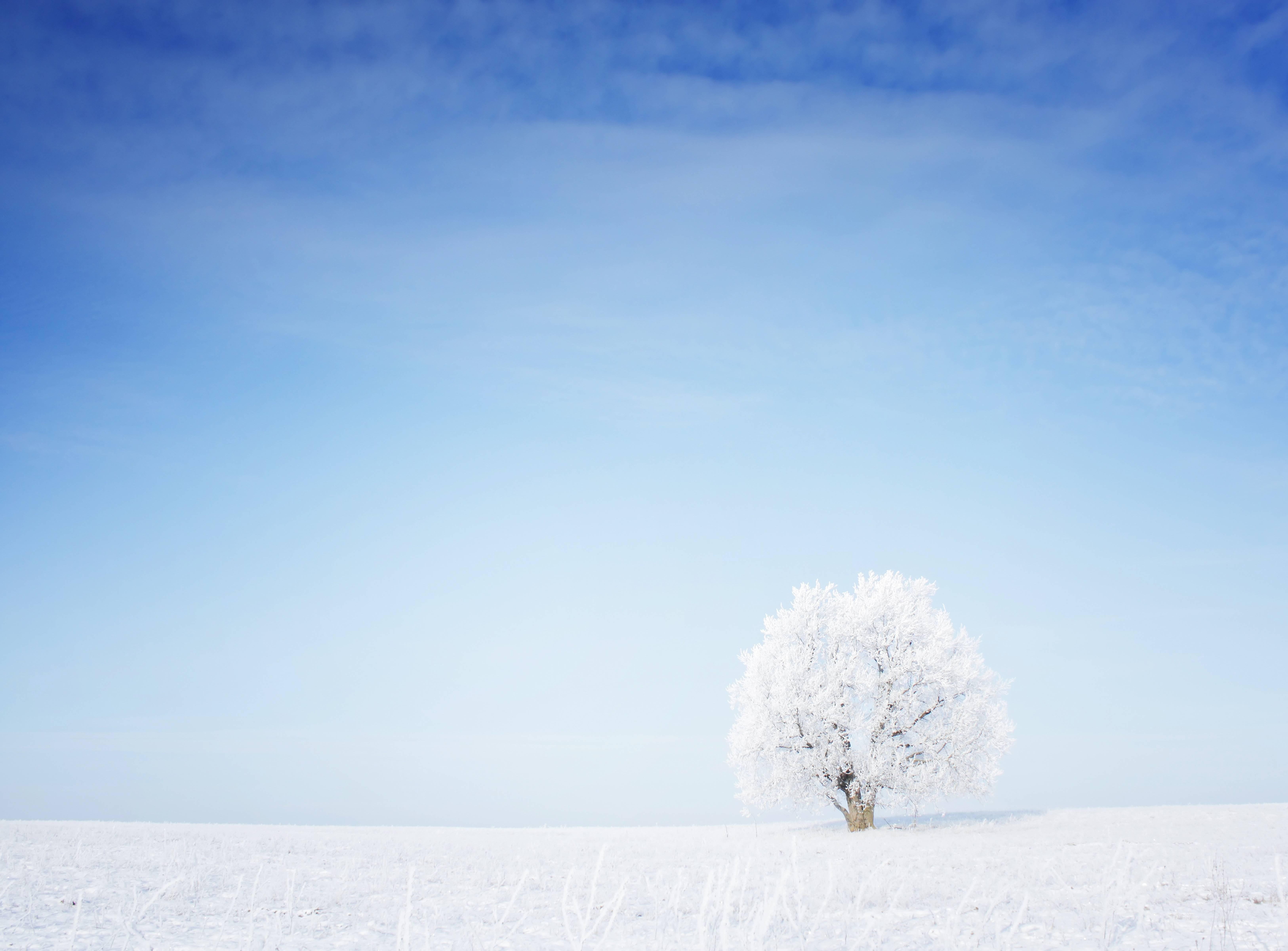 безоблачное небо зимой  № 2469689 бесплатно