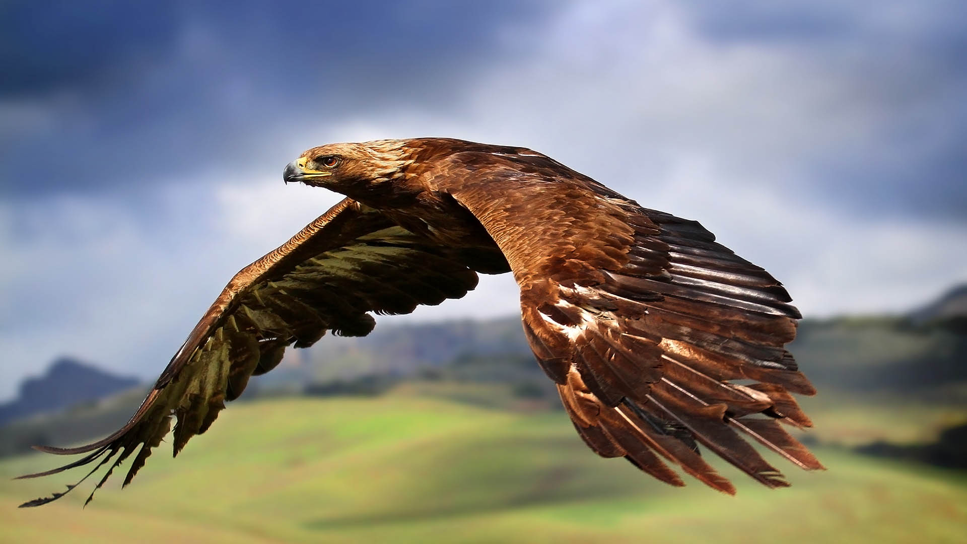 eagle in flight wallpaper hd  Wallpaper Hd Fondos de Pantalla Hd 1920x1080