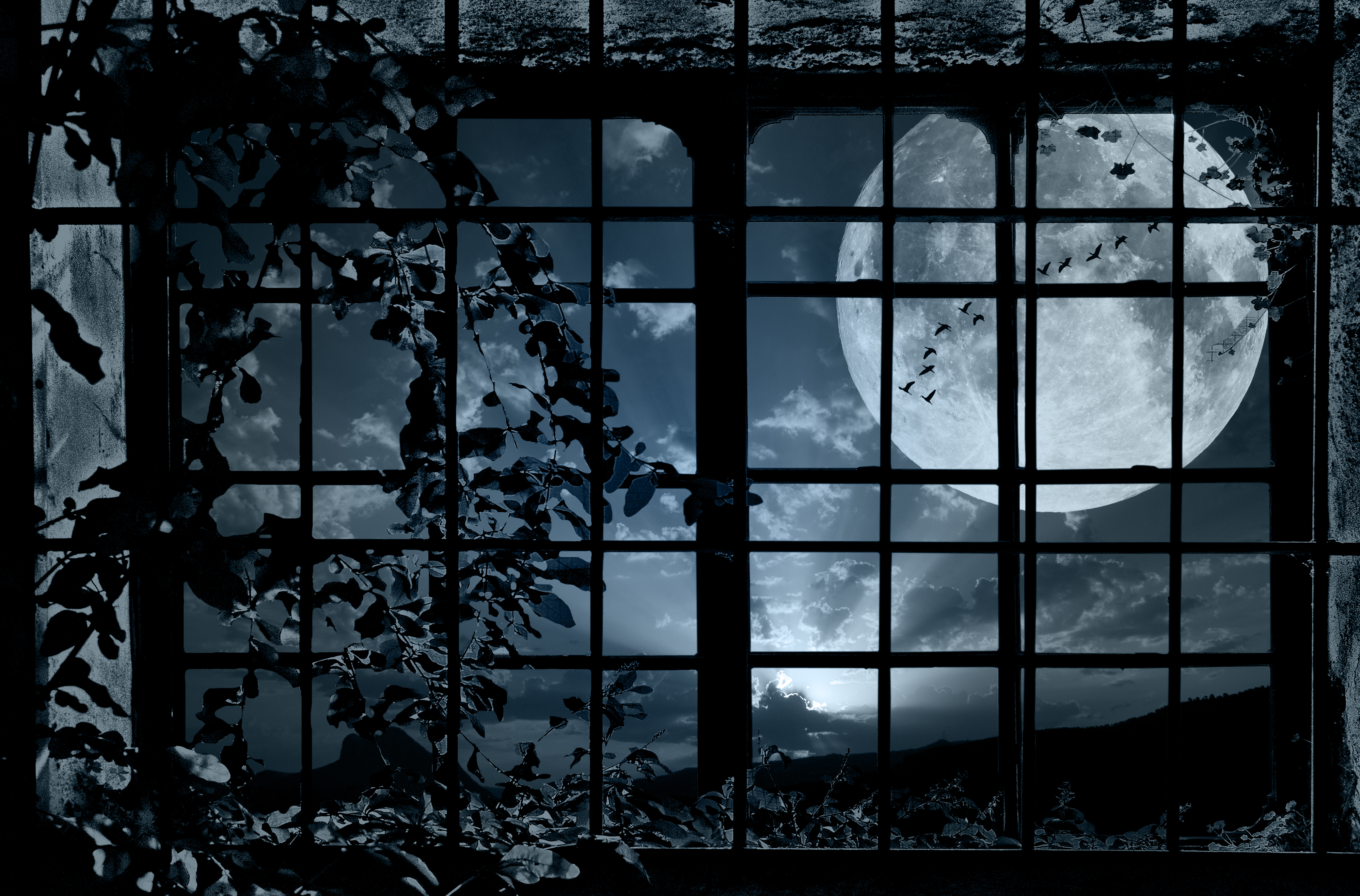 grille plant bindweed moon flock birds mood bokeh wallpaper background 3994x2632