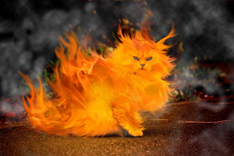 PantherKut Burning Cat [ Photo ] 800x533