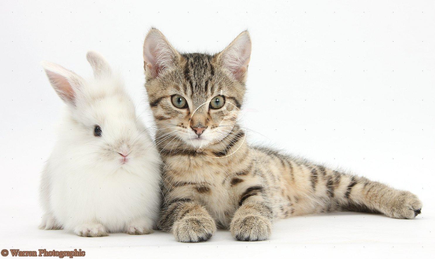 worlds tiniest cat