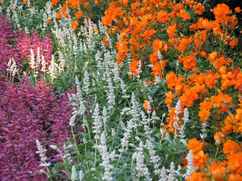 flowers garden HD Wallpaper   Flowers Plants 1133030 820x615