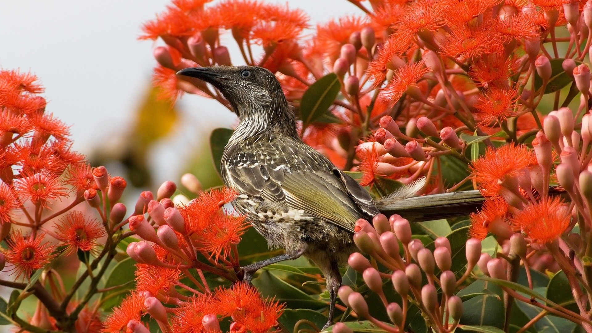 wallpaper birds and flowers which is under the birds wallpapers 1920x1080