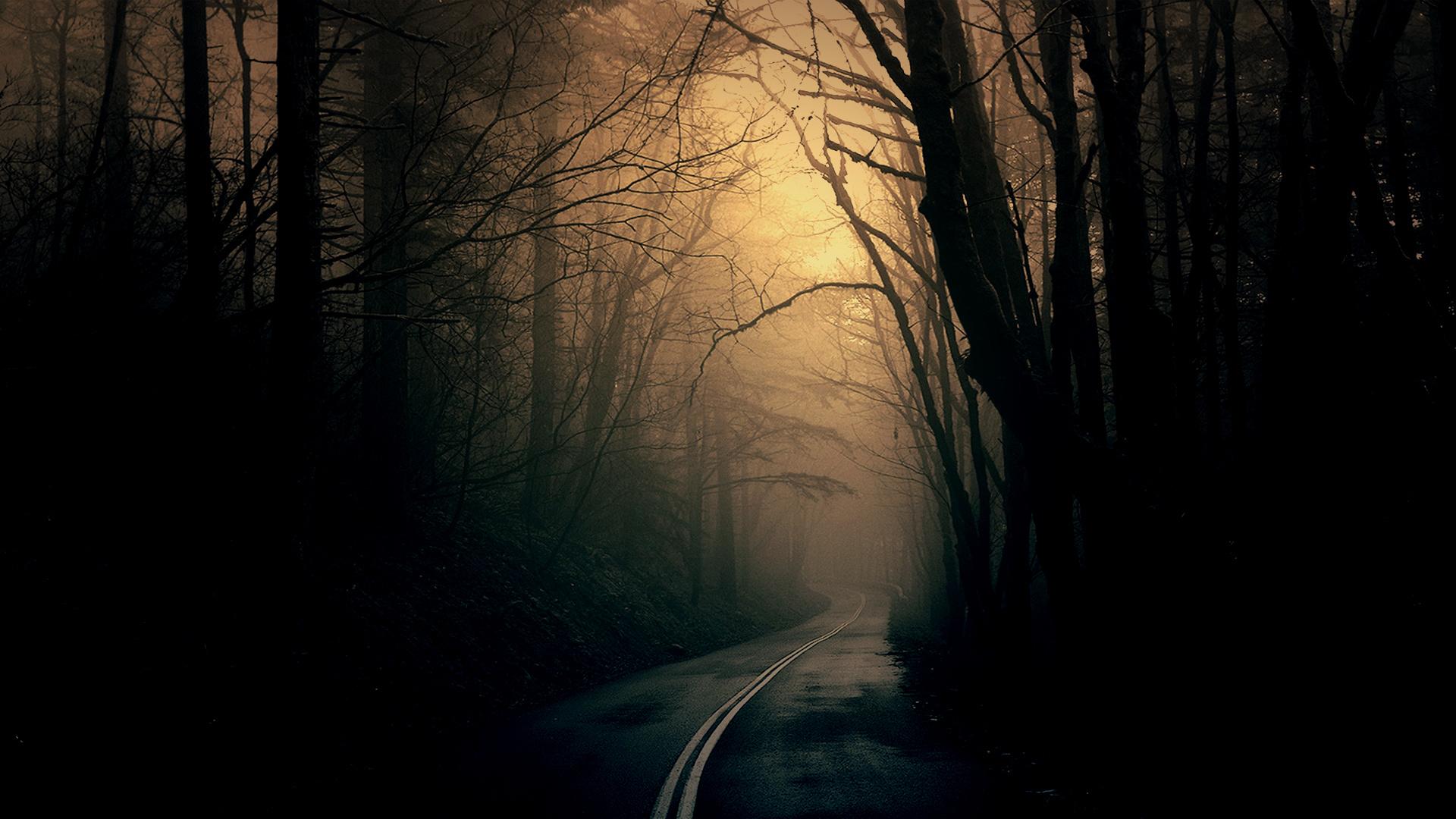 Theme Bin Blog Archive Dark Forest Road HD Wallpaper 1920x1080