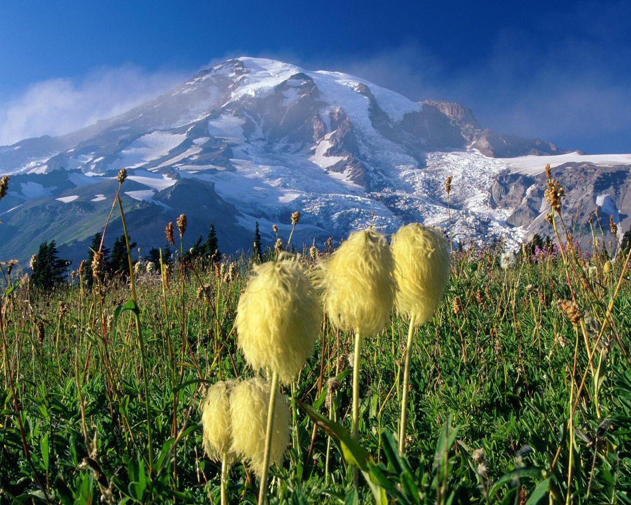 hd wallpaper backgrounds Mount Rainier National Park HD Wallpaper 1280x1024