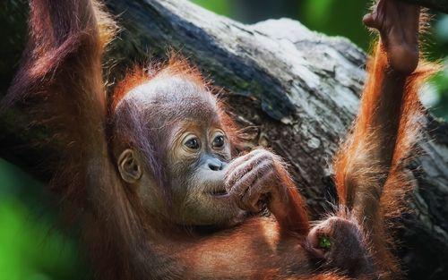 Thoughtful Little Monkey image for iPhone Blackberry iPad 500x313