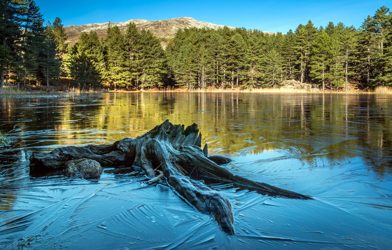 Wallpaper forest water trees lake France snag Corsica images 1332x850