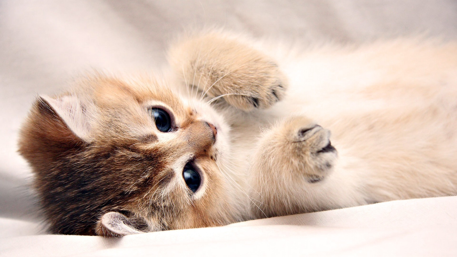Kitten Desktop Backgrounds   Wallpaper High Definition High Quality 1920x1080