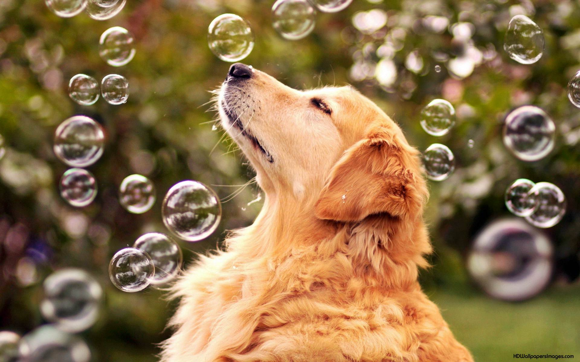Pics Photos   Dogs Desktop Wallpapers Download And 1920x1200