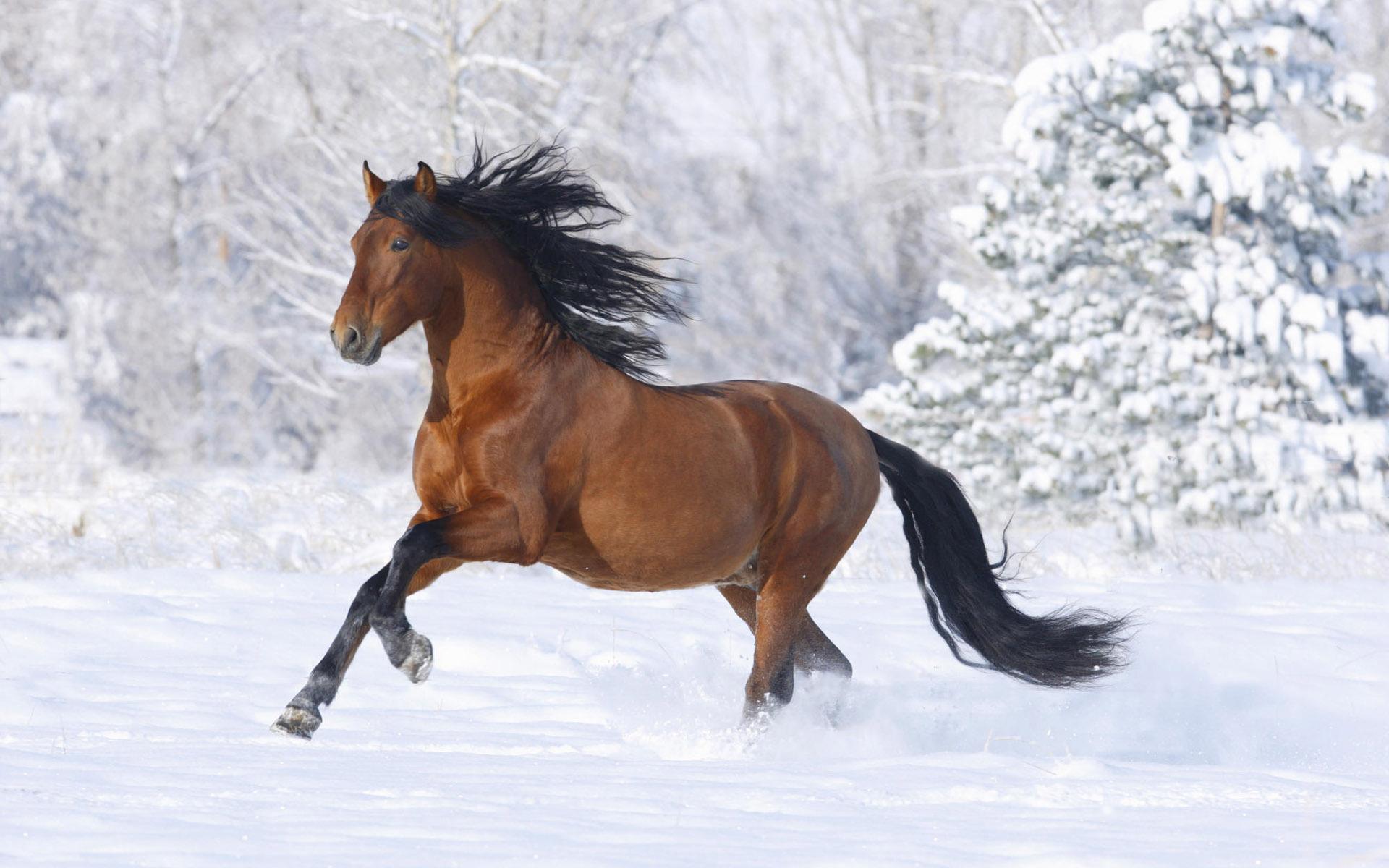 Winter Horse Wallpaper Winter Pinterest 1920x1200