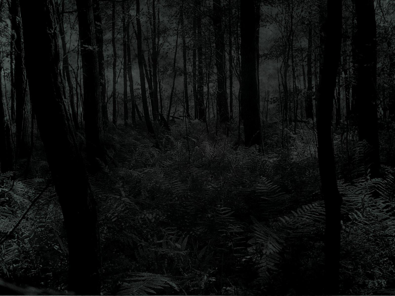 72 Dark Forest Wallpaper On Wallpapersafari