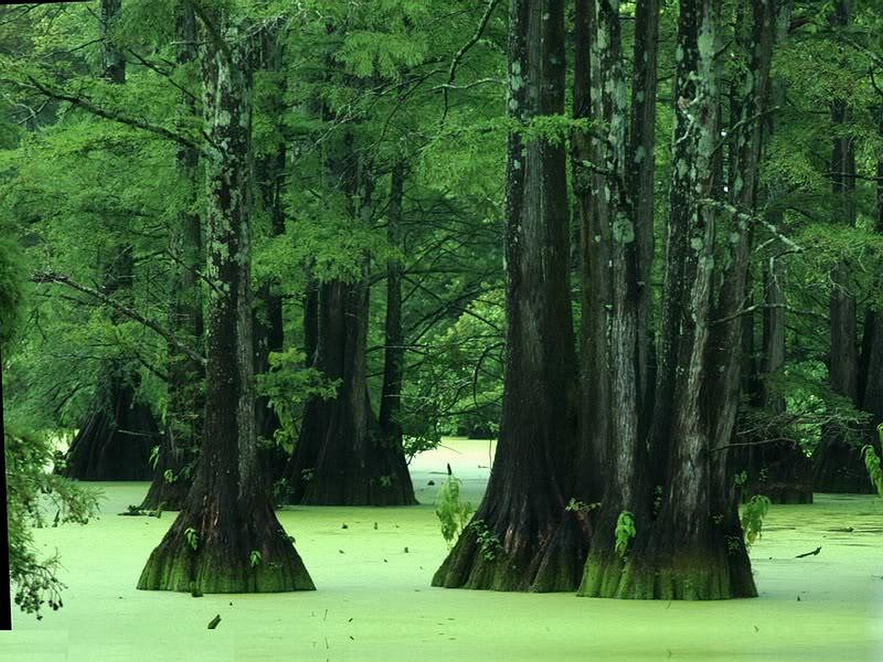 Swamp Computer Wallpapers Desktop Backgrounds 1280x960 1280x960