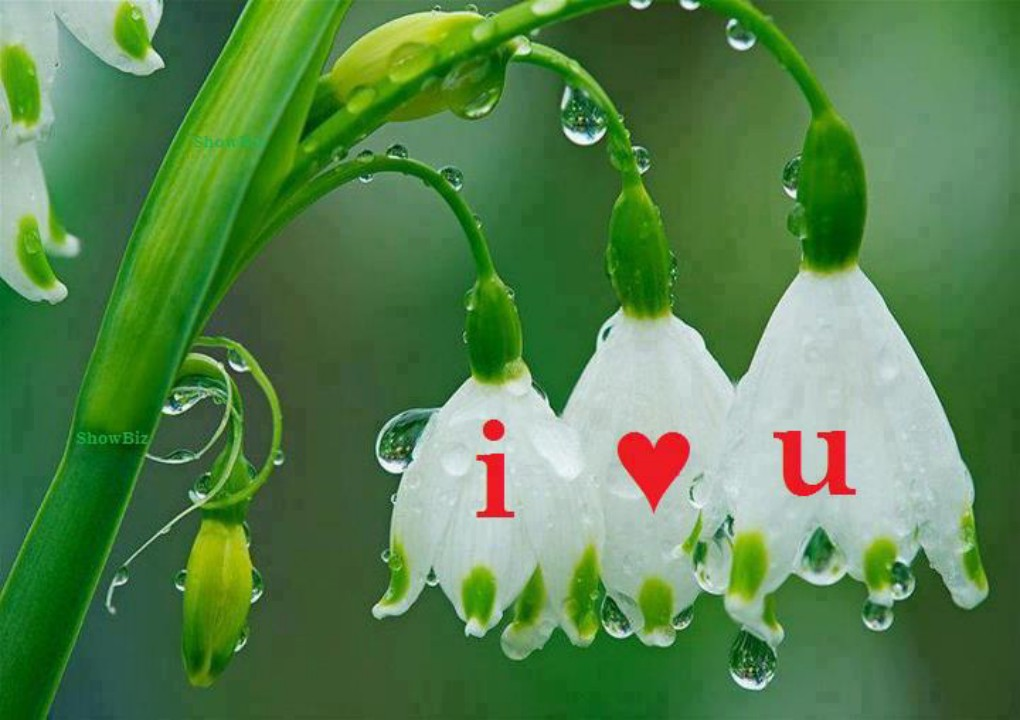 Love U Beautiful Wallpaper : Beautiful Wallpapers of Love - WallpaperSafari