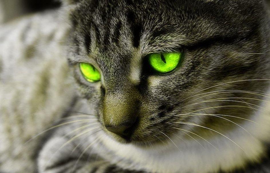 Cat green eyes wallpaper   ForWallpapercom 943x606