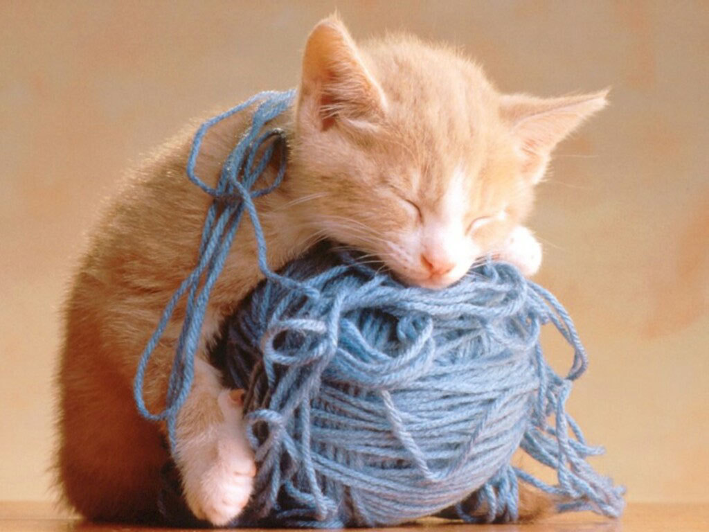 Cute Kittens images Adorable lil Kittens HD wallpaper and background 1024x768