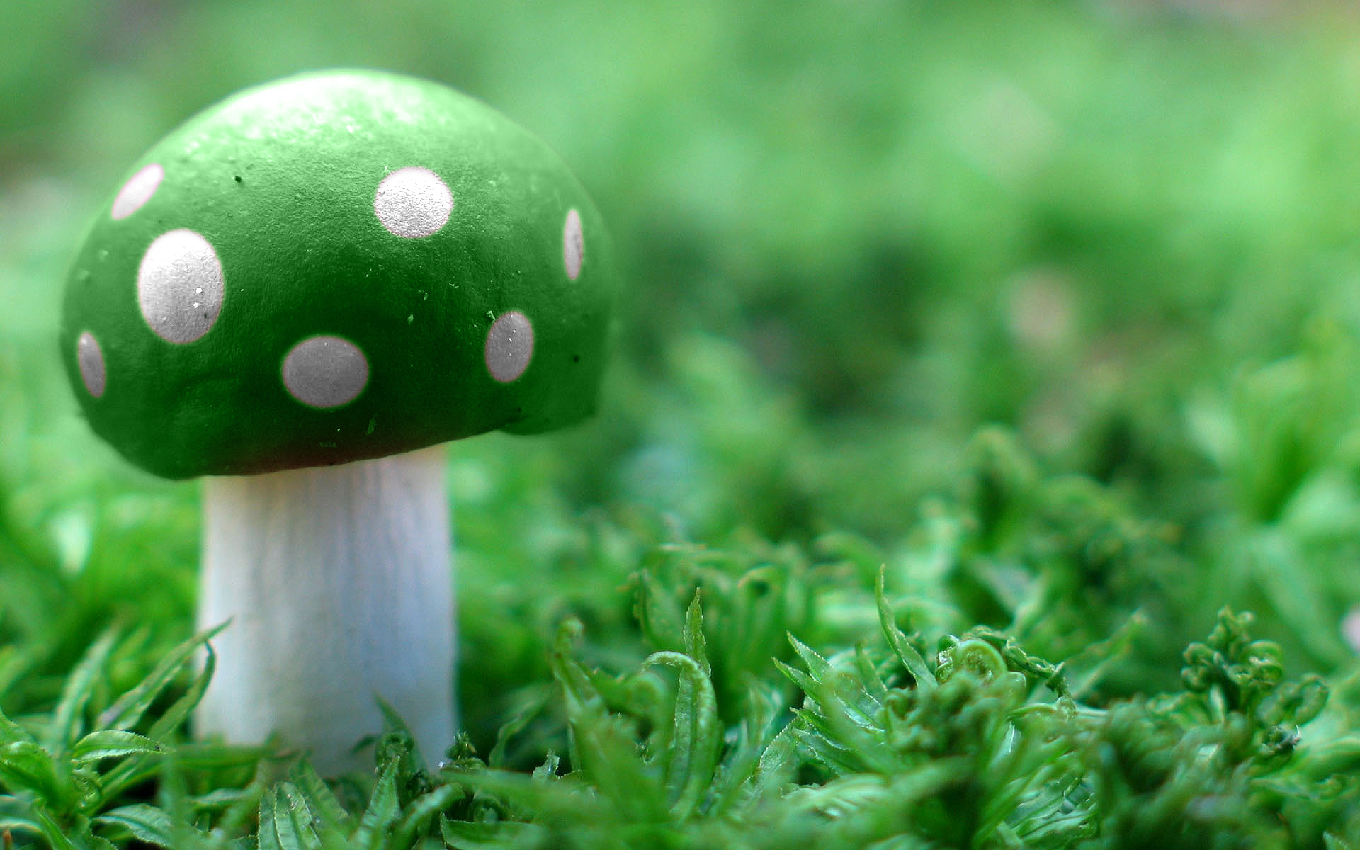 Green Mushroom Wide Wallpapers HD Wallpapers 1920x1200