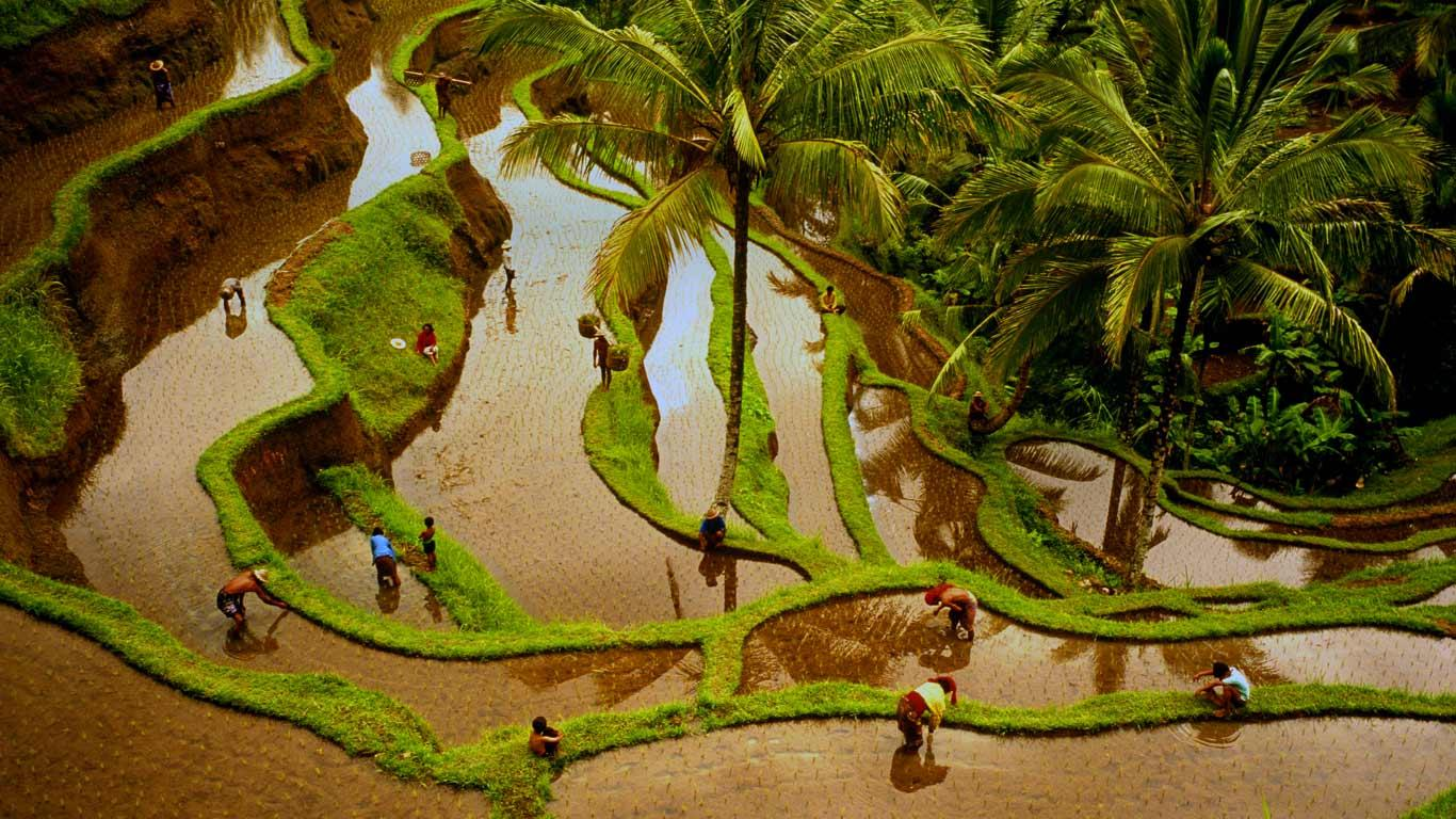 Rizires Bali Indonsie Denis WaughGetty Images 1366x768