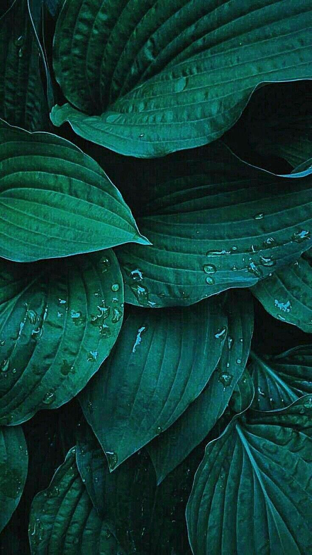 RANDOM PHONE WALLPAPER Plant wallpaper Green aesthetic Plant 736x1309