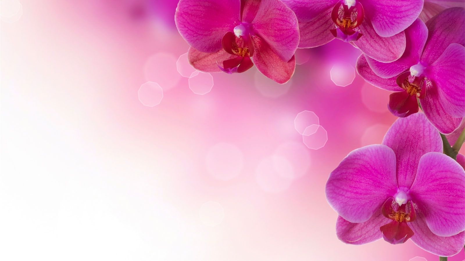 Pink Flower Background wallpaper wallpaper hd background desktop 1600x900