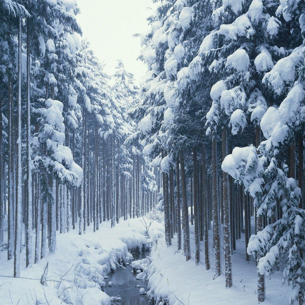 FREE Wallpapers for iPad Winter Snow Forest River 1024x1024