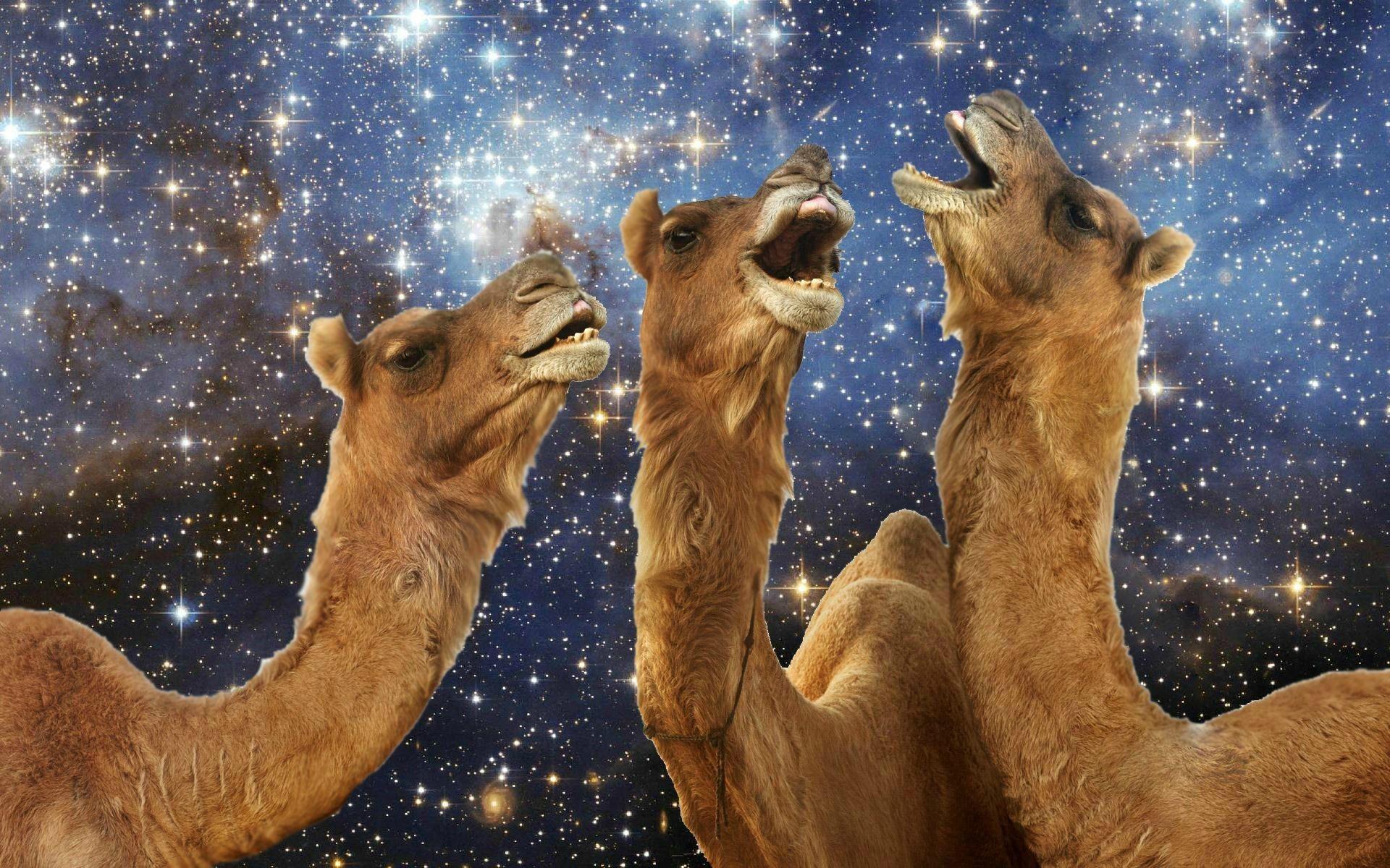 Llama lachen wallpaper 11460 PC de 1920x1200