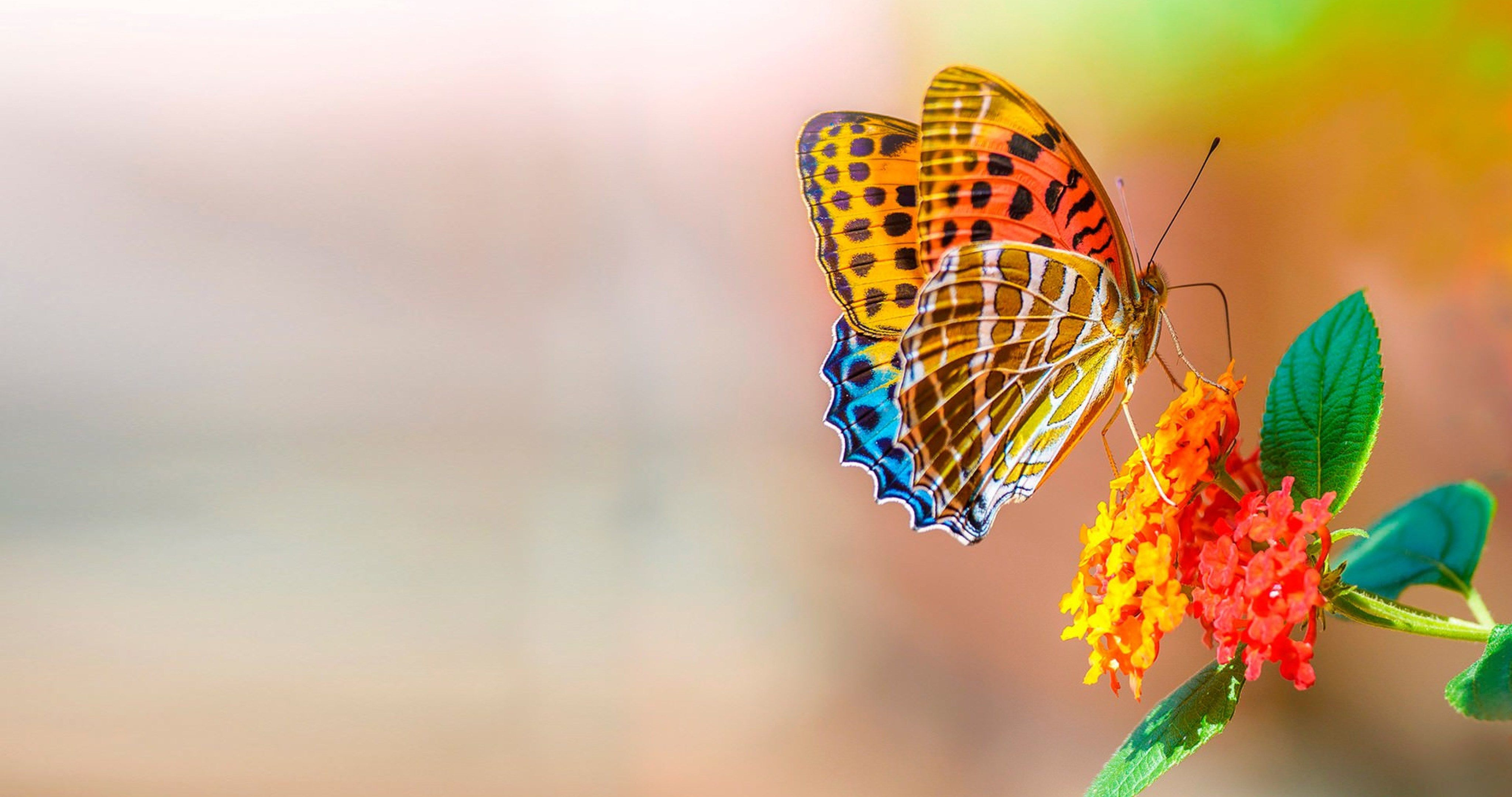 Free Download Butterfly And Flower 4k Ultra Hd Wallpaper Ololoshenka 4096x2160 For Your Desktop Mobile Tablet Explore 27 Butterfly 4k Wallpapers Butterfly 4k Wallpapers Butterfly Wallpaper Butterfly Backgrounds
