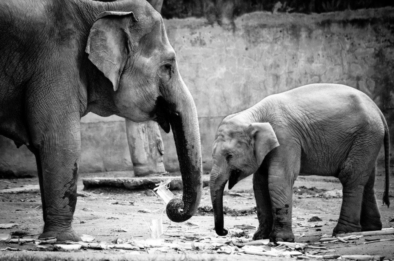 47+ Cute Elephant Wallpaper on WallpaperSafari