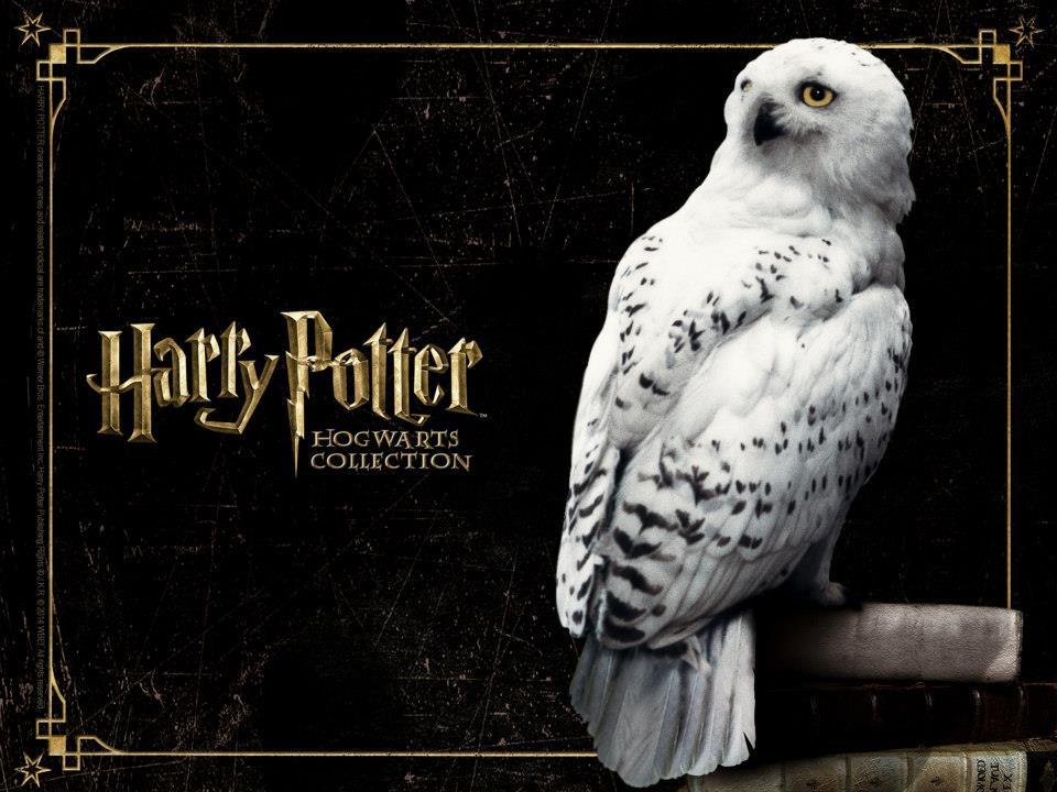 Harry Potter 960x720