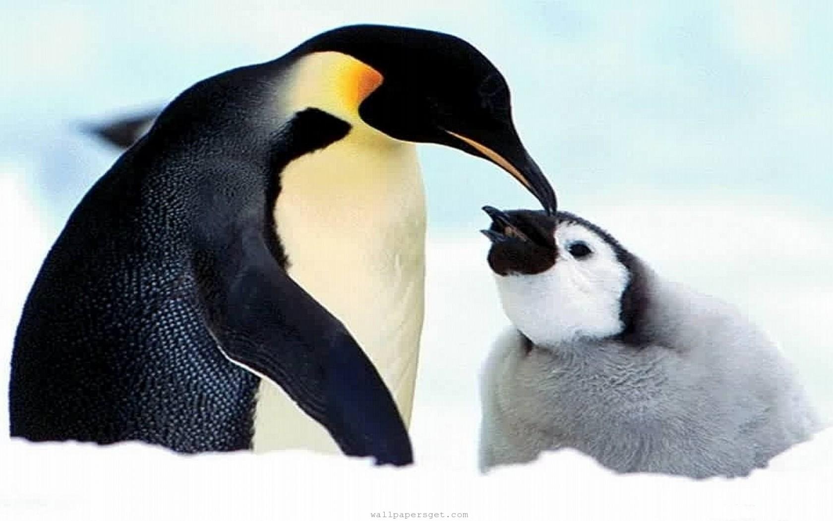 Image Result For Animal Wallpapers Free Animal Desktop Wallpaper Desktop