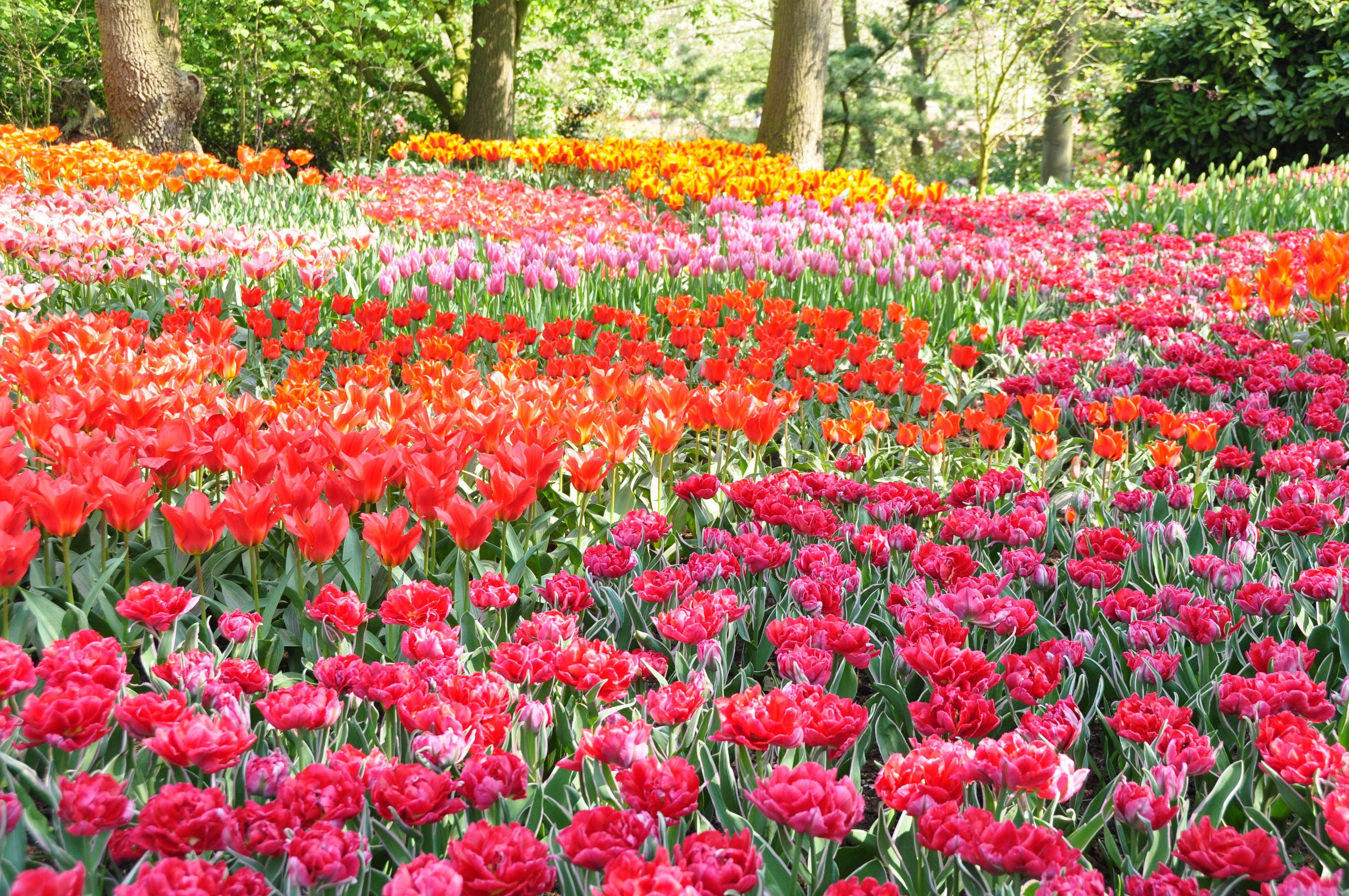 Flower Garden in Park Computer Wallpapers Desktop 4288x2848