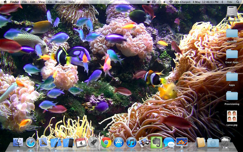 Aquarium   Relaxing live wallpaper background on the Mac App Store 800x500