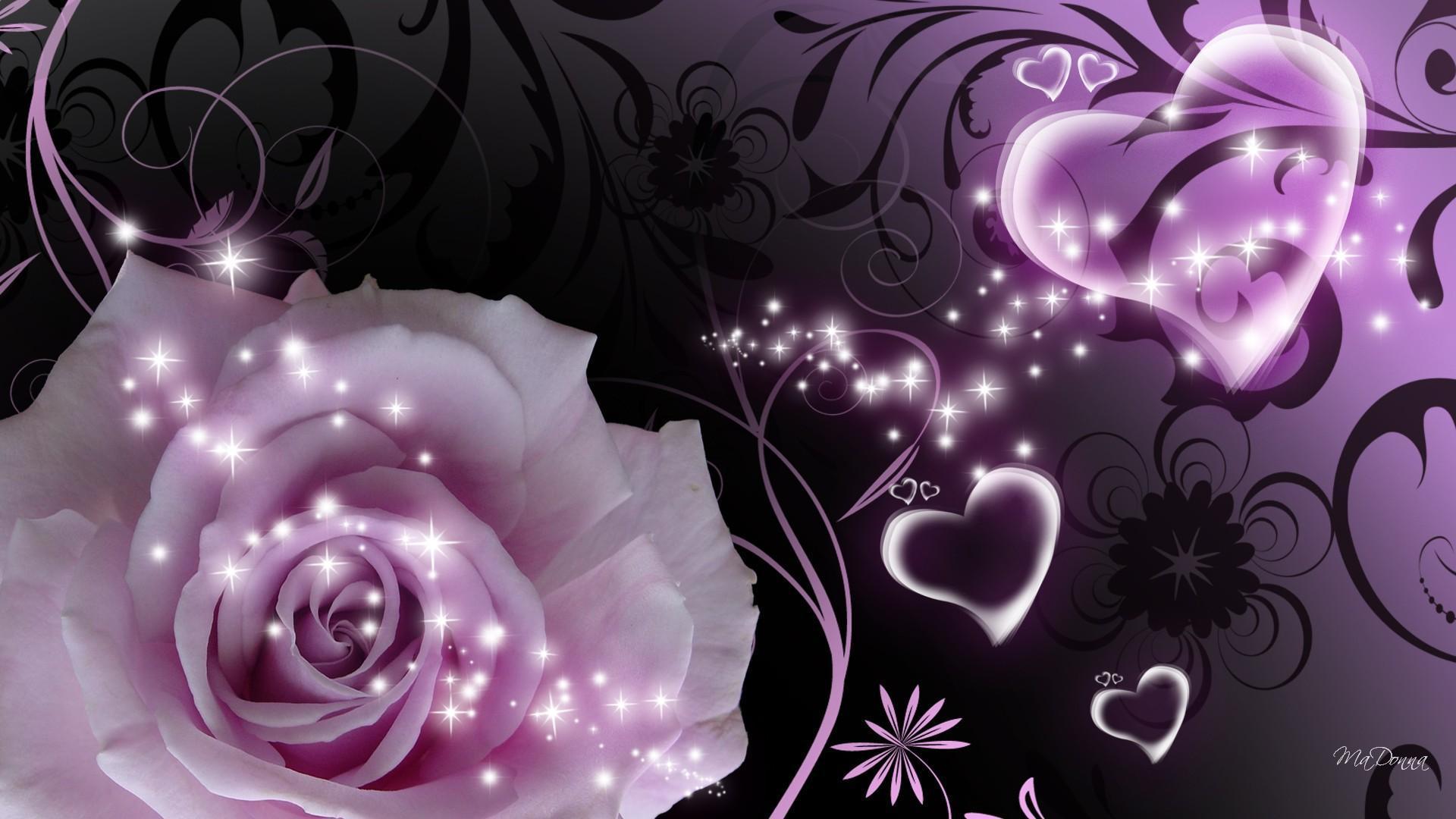 Purple And Black Hearts Wallpaper: Beautiful Purple Roses Wallpapers