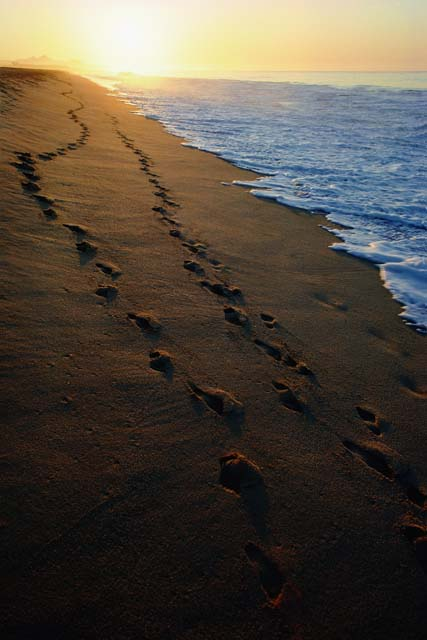 The image of Jesus footprints in the sand came 427x640